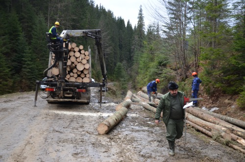 Forest workers in Romania (Gepp)